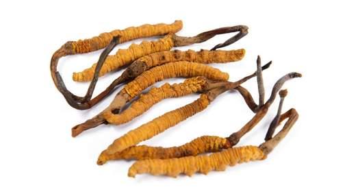 Лекарства на основе гималайского гриба эффективны против рака: исследование
