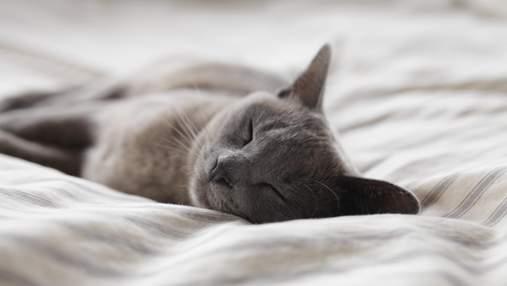 Без кофе и забот: 7 советов, как хорошо выспаться